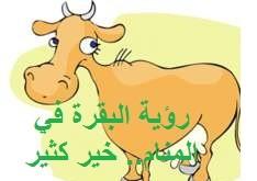 رؤية البقرة في المنام متى تكون خيرًا للإنسان؟